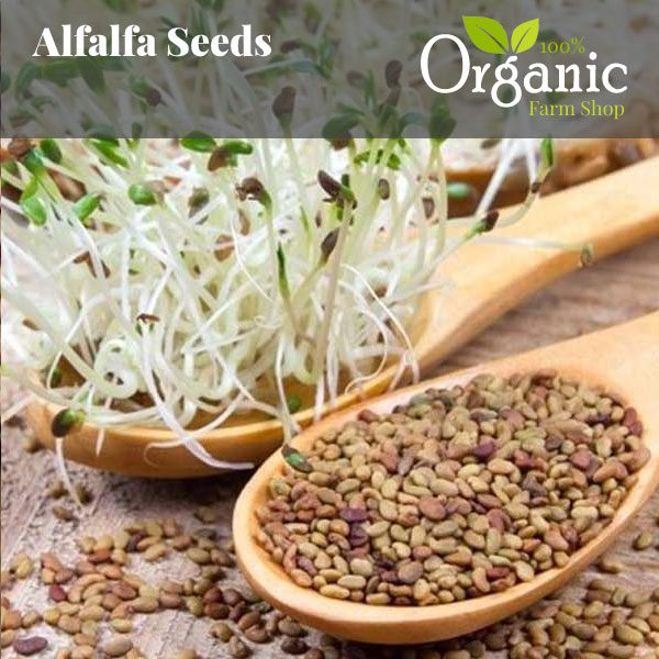 Alfalfa Seeds- Certified Organic