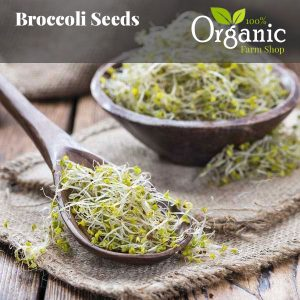 Broccoli Seeds - Certified Organic